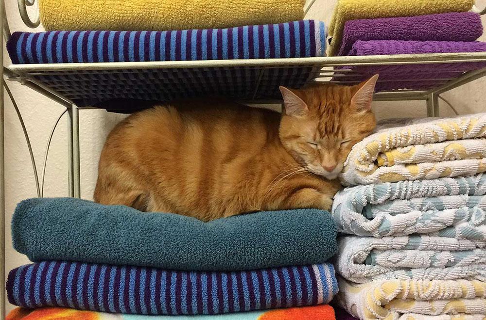 cat at home asleep