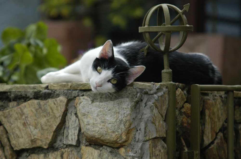 Cat relaxing in garden