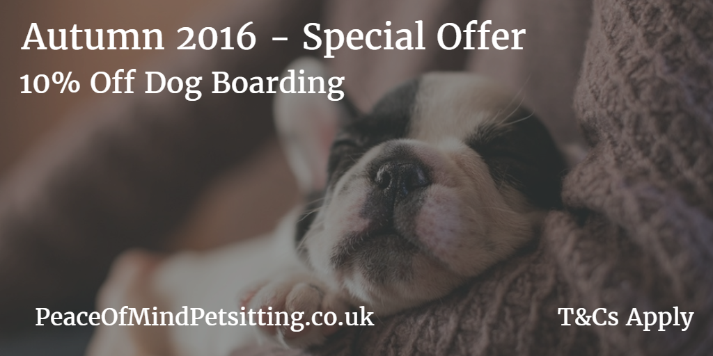 dog boarding special offer 10% discount voucher